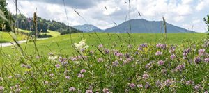 Ammergauer Alpen: Biodanza & Wellbeing mit Barbara und Erhard @ SEINZ Wisdom Resort